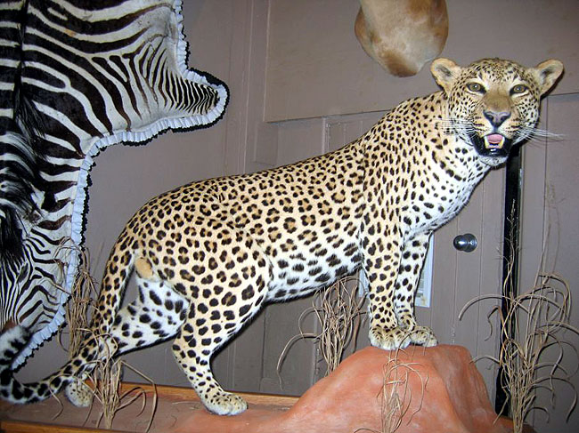 Image result for Taxidermists